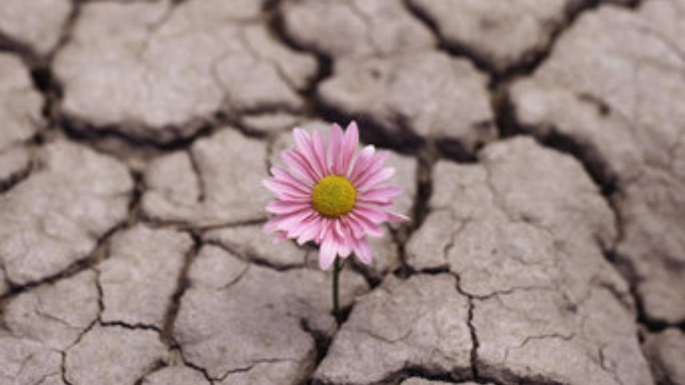 ¿Sabes que es la resiliencia?
