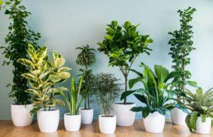 Beneficios de las plantas de interior
