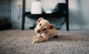 Es aconsejable tener un perro en casa