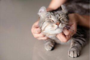 Beneficios de tener animales en el hogar